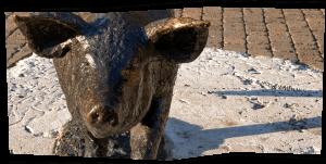 Castelnuovo - Compra da noi