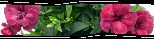 Piante e fiori a Castelnuovo Rangone e Montale - Compra da noi